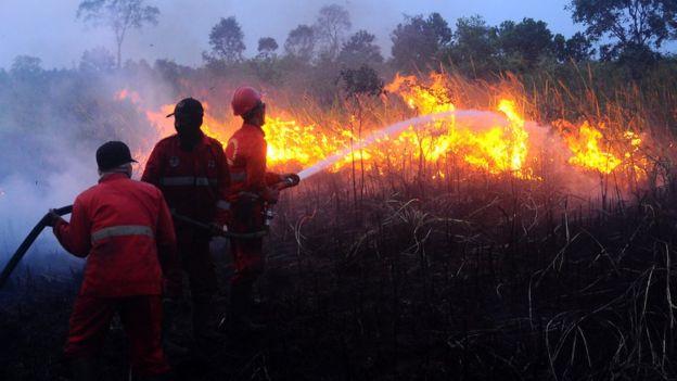 Kebakaran Hutan Ancaman Jokowi Pecat Pejabat Tni Polri