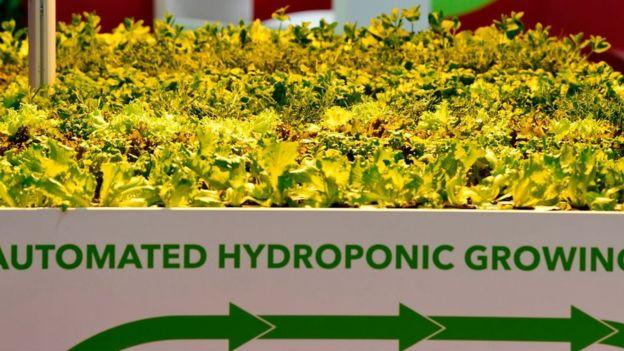 Plantación hidropónica