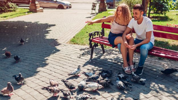 Casal em um banco de praça, ao lado de pombos