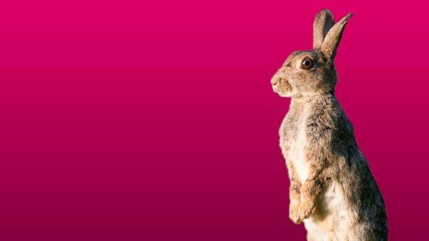 Conejo en fondo rosa