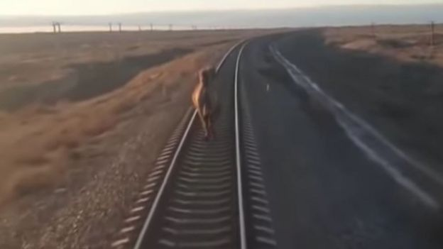 نتيجة بحث الصور عن Camel + Train