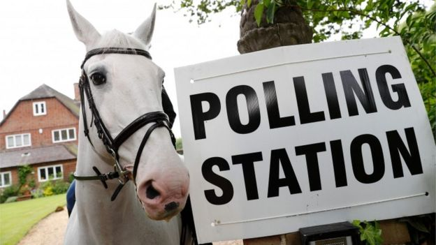 Horse at polling station