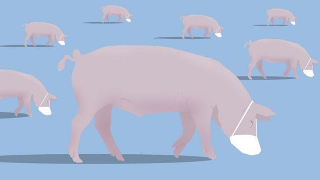 Ilustración de cerdos llevando mascarillas.