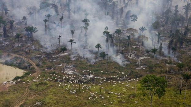 Fogo numa fazenda de gado em São Felix Do Xingu, Pará, em 2008