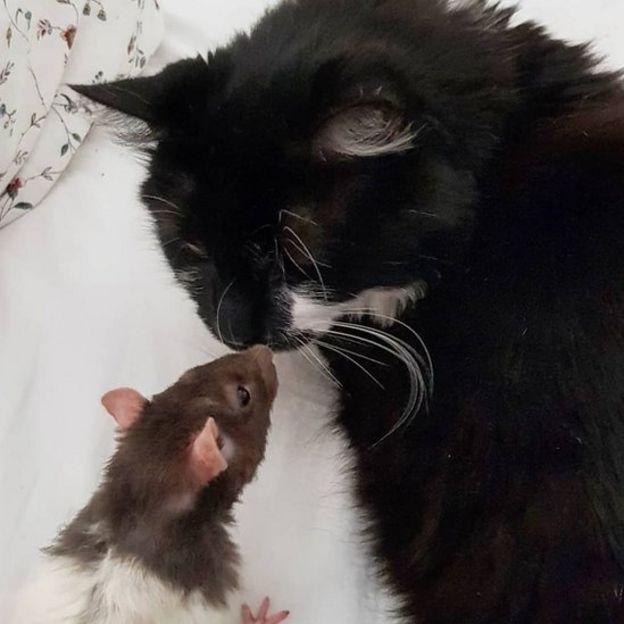Magic the vegan cat cuddles a rat