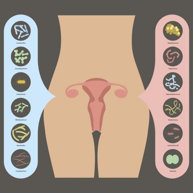 Ilustración de la flora bacteriana en la vagina