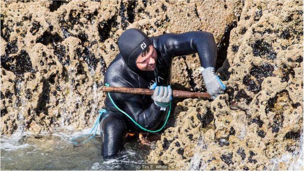 Mergulhador caçando percebes