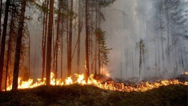 15 iyulda İsveçdə baş vermiş yanğın