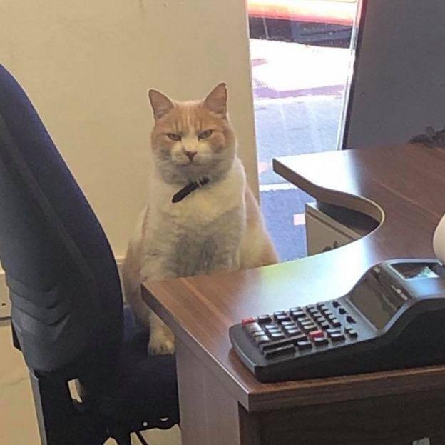 Уилбур в офисе финансовой организации