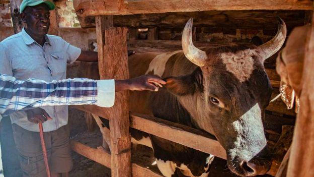 கென்யாவில் கோலாகலமாக நடக்கும் காளை விளையாட்டு - ஏராளமானோர் பங்கேற்பு
