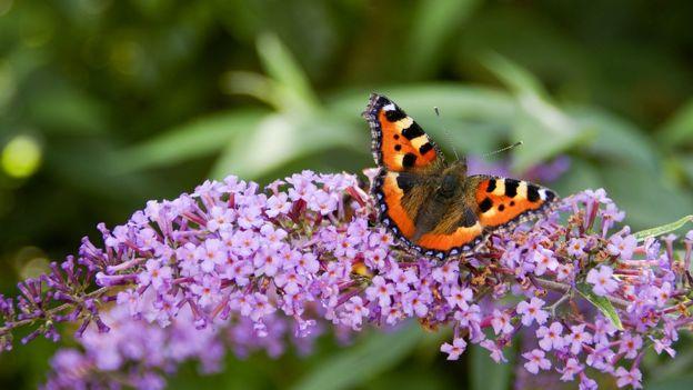 Los expertos recomiendan que nuestros jardines sean más amigables a los insectos. Foto: GETTY IMAGES