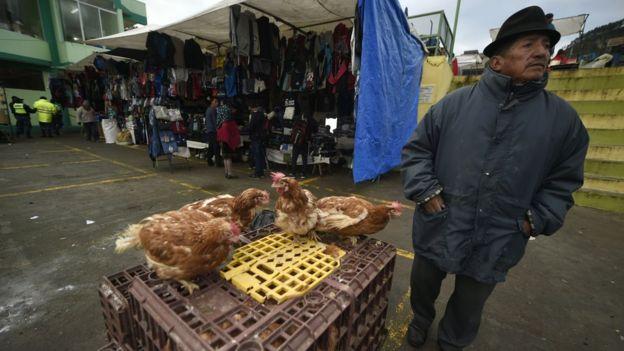 Gallinas en un mercado de Cotopaxi, en Ecuador