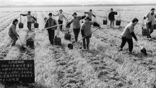 Peasant farmers of the hungching production brigade fertilizing a wheat field with manure, china, 1967, in the foreground is a blackboard bearing quotations from chairman mao.