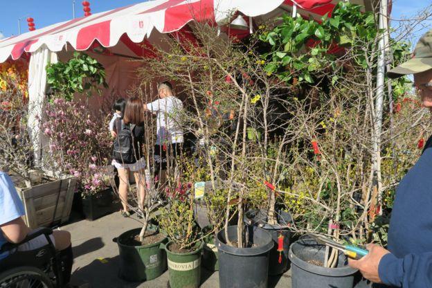 Chợ hoa Phúc Lộc Thọ, không bằng Việt Nam nhưng cũng đủ cho người xa quê chút hương vị Tết