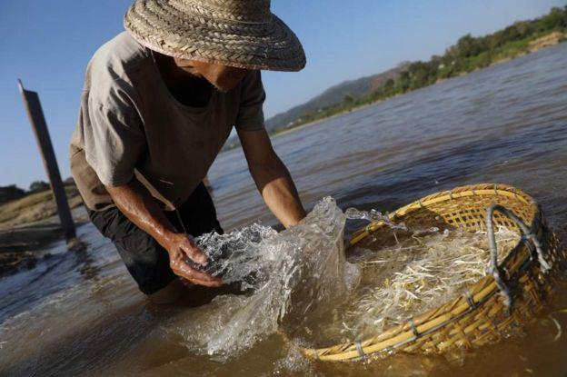 農民說,湄公河的沙丘含有植物生存所需的豐富營養。