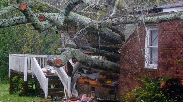 Дерево впало на будинок