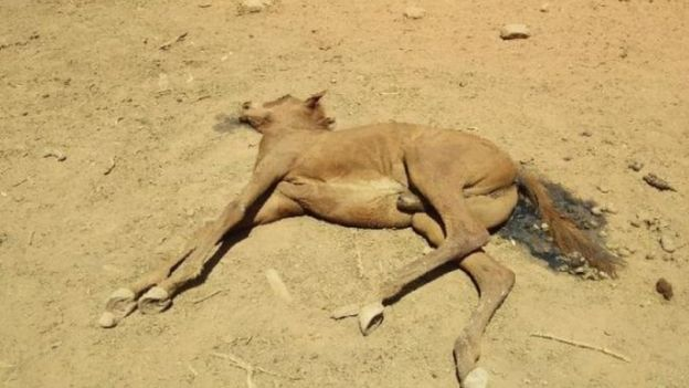 Australia-horse-death- Wild-animals-perish-at-dried-up-waterhole