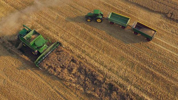 Área de cultivo na França