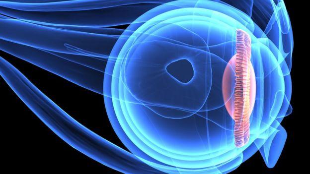Ilustración científica de una retina