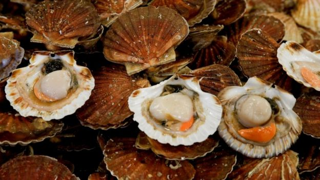 Scallops on a market stall during an annual celebration in Port-en-Bessin, France