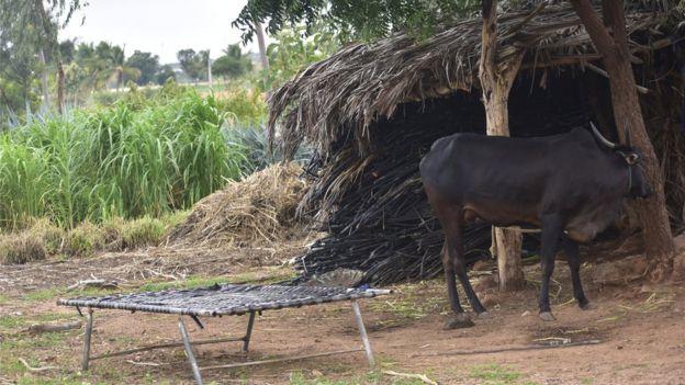 The hut where Mallappa killed himself