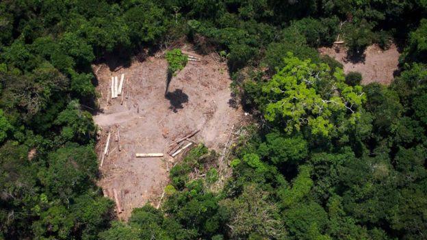 floresta desmatada