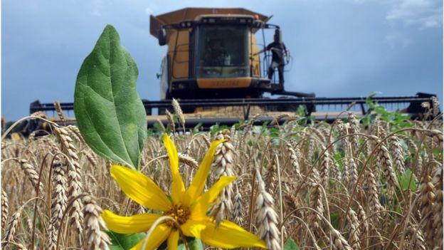 Курс гривні разом із усією економікою і надалі дуже залежить від того, яким буде врожай зерна і ціни на світових ринках