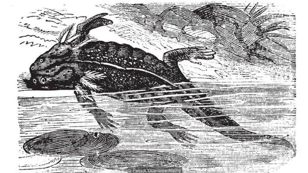 Ilustração de axolote