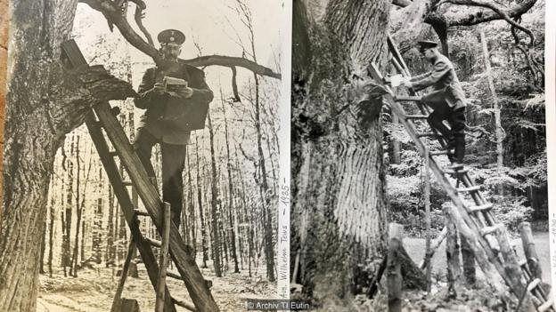 Carteiro entrega cartas para a árvore