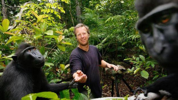David Slater con los macacos de Indonesia