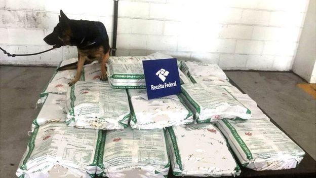 Cão em cima de sacos de açucar com cocaína