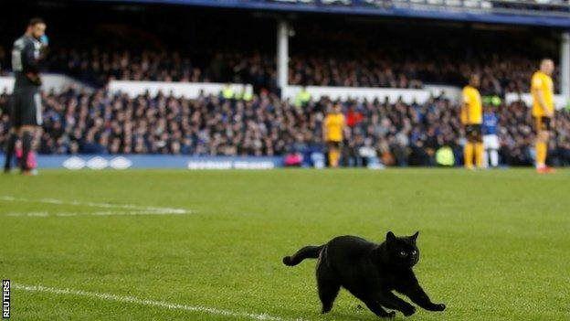 Кіт на полі