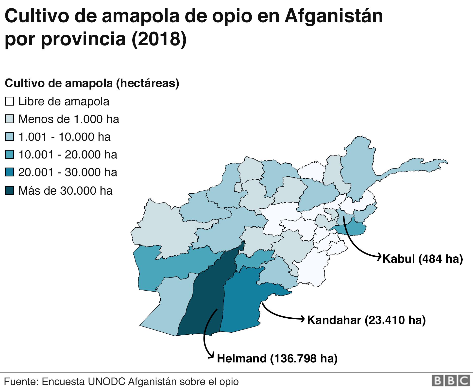 El mapa muestra las áreas de Afganistán donde se cultiva la mayor cantidad de amapola de opio.