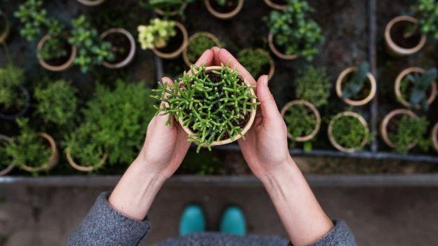 tanaman di pot