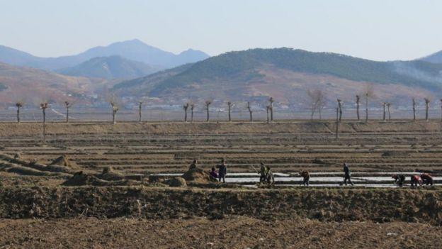 Les gens travaillent dans des champs nus en Corée du Nord