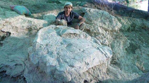 Titanochelon tısbağaları böyük ölçülərə sahib olublar