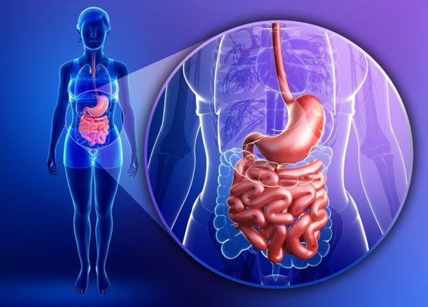 Aparelho digestivo humano