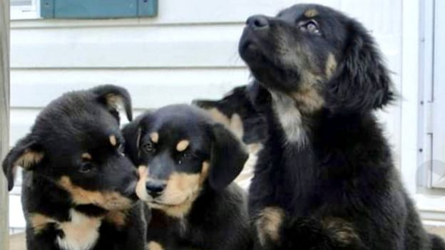 Recovered puppies