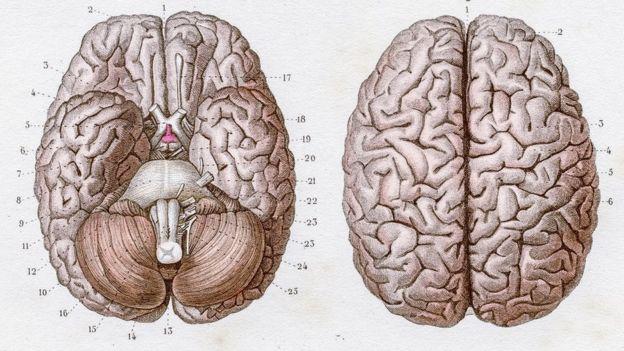 Dos imágenes del cerebro, una exterior y otra interior