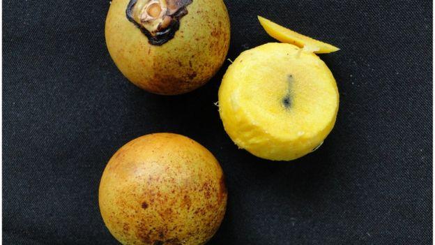 Resultado de imagem para fruto de macaúba