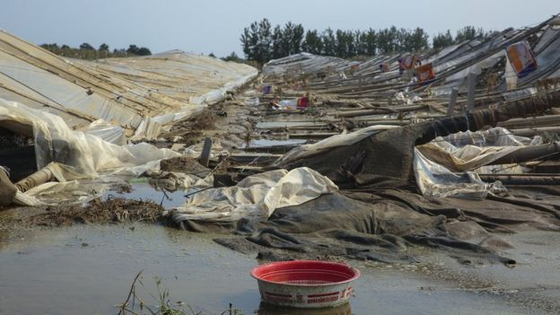 農作物受災面積16萬多公頃;初步估算,直接經濟損失過百億元。