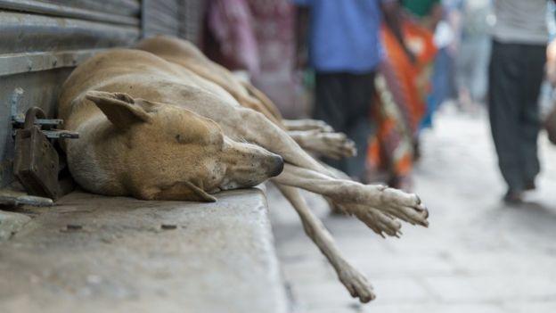 Cão deitado em marquise, com pedestres ao fundo