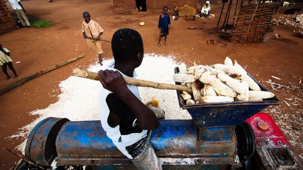 A young boy was putting maize in a grinding machine in order to grind the maize for selling in the market at Jinja in Uganda.