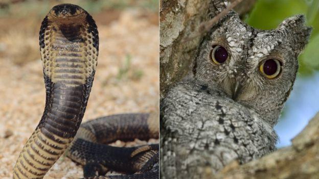 Left: A cobra. Right: An owl
