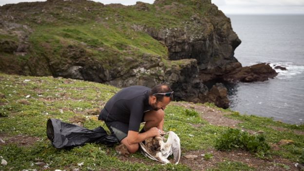Ornitólogo con los restos de una gaviota