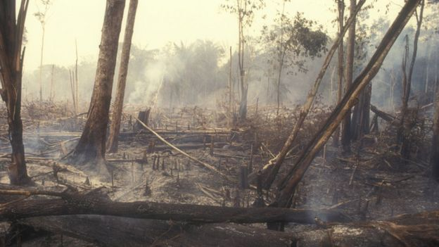Árvores queimadas na Floresta Amazônica