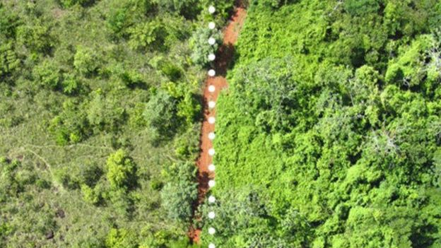 Foto aérea mostra diferença entre área que recebeu experimento (à dir.) e outra que não (à esq.)