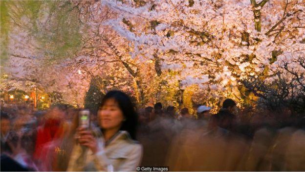 Mulher em meio a cerejeiras
