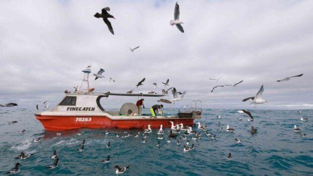 يمكن أخذ الاحتياطات اللازمة لمنع صيد طيور القطرس عن غير قصد