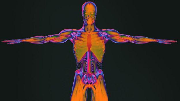 Dibujo de las partes del cuerpo humano.